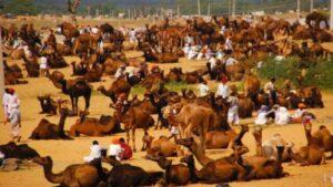 Miglioiri posti da vedere in Rajasthan